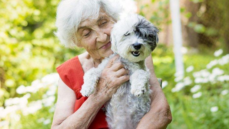 犬を飼っている人は10歳若い?!研究で分かったアンチエイジング効果とは?