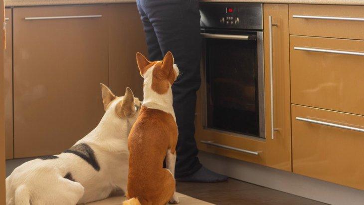 犬が『ご飯ちょうだい~』と言っている時にする仕草や行動4選