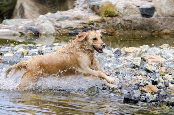 犬と川遊びができる関東のおすすめスポット6選!