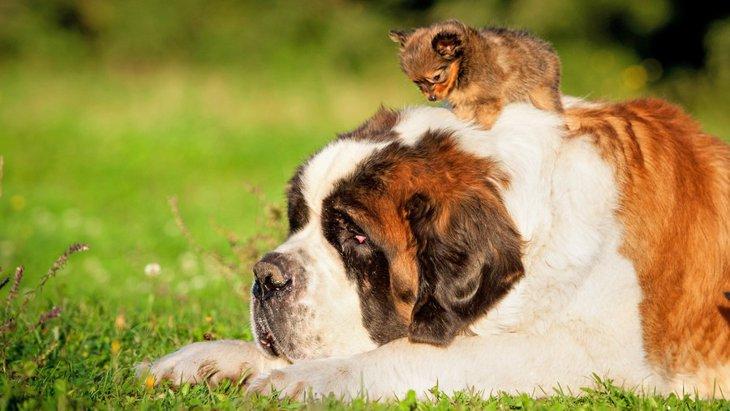 超大型犬5選!愛らしくて温厚なワンコたち