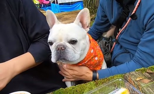 【さすがユーチューバー犬!】フレブルのイベントを満喫するワンちゃん♪