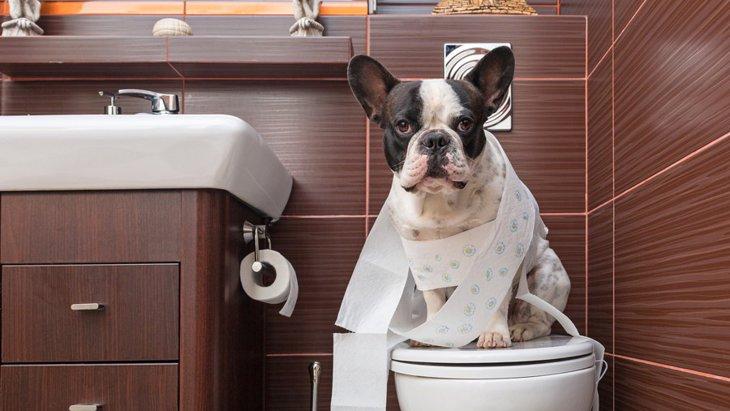 メッシュ付き犬用トイレを清潔に保つお手入れ方法