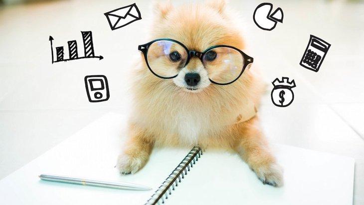これから飼う犬種の選び方!自分に合ったわんこや相性の見極め方