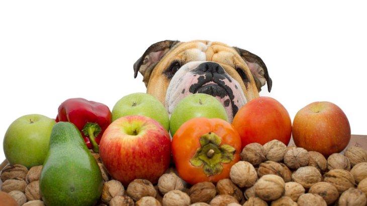 犬に食べさせてはいけない絶対NGな果物4選