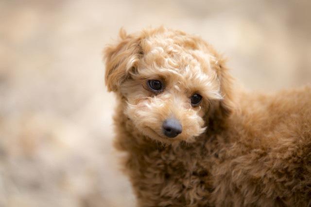 犬が感じやすいストレスは「性格」によって異なる?