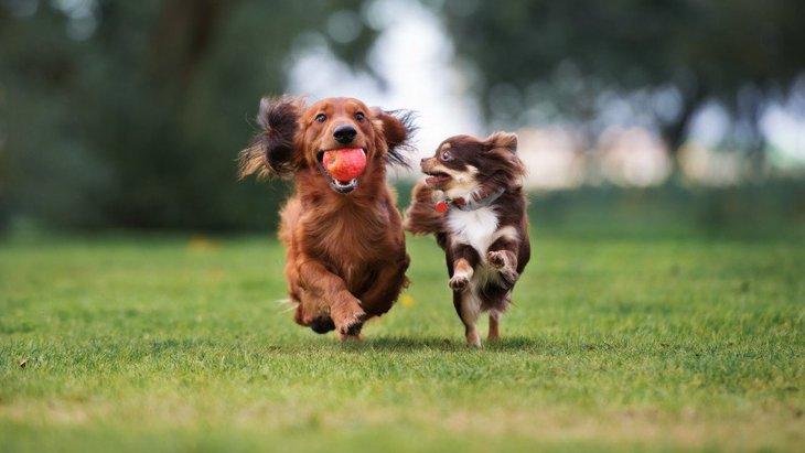 犬同士の『友情』ってあるの?友達を作る必要は?