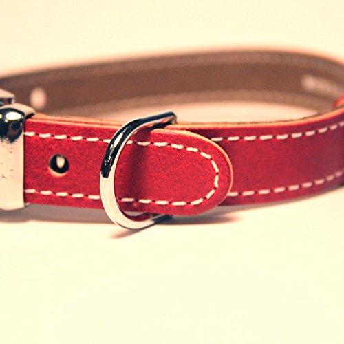 犬の首輪が革材質のメリットデメリット!皮膚に負担がかからない選び方
