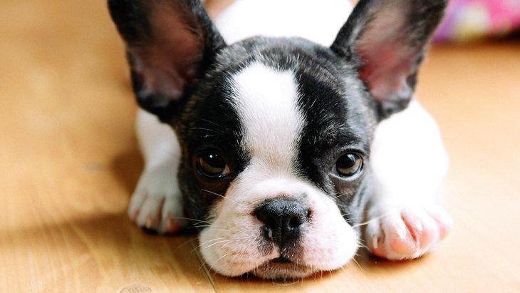 犬の飼育放棄はなぜ起こる?犬を飼う前にもう一度考えたいモラル
