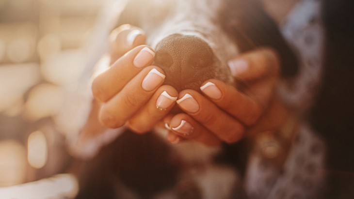 犬の鼻のパターンは人の指紋のように固有のものか?という研究結果