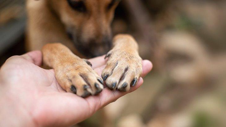 犬のお手・おかわりは右と左どっちからがいいの?