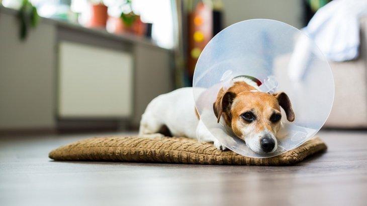 犬がストレスを抱えると起こす6つの症状