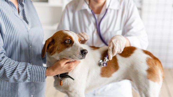 犬のウンチが異常に臭い時の原因5つ