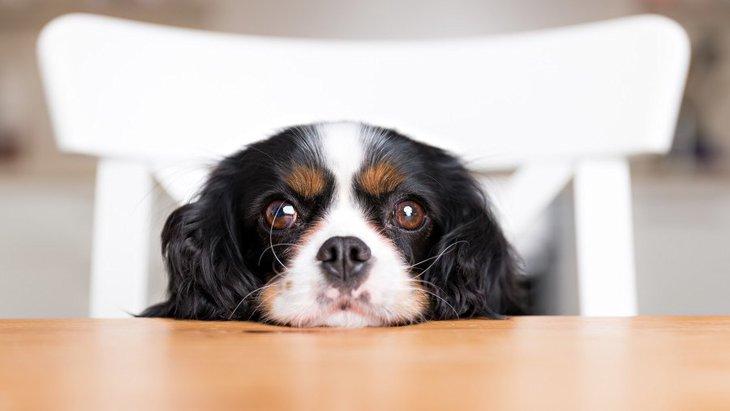 犬が「失明」してしまう原因と予防方法