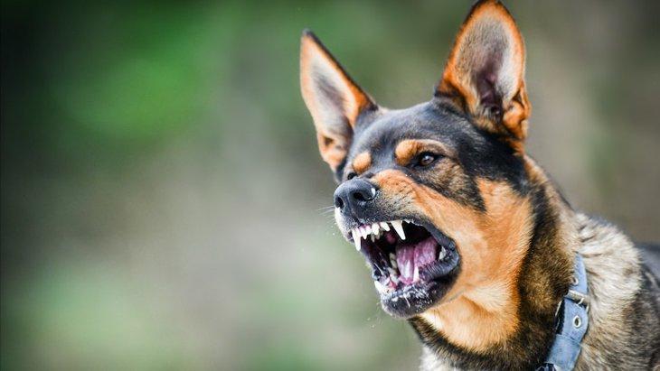 愛犬が他人に怪我を負わせてしまった時の対処法と回避する方法