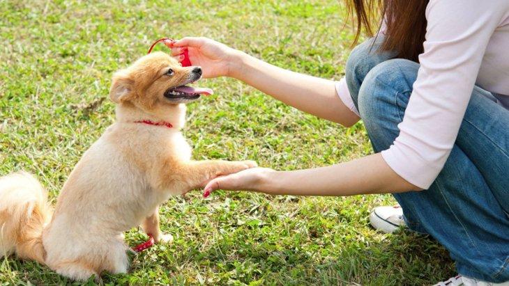 愛犬のしつけを必ず成功させる方法