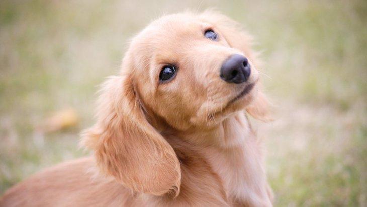 犬の『絶対に油断してはいけない瞬間』2選!散歩中や小さな子供に要注意