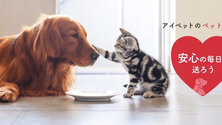 ペット保険なら数々の【NO.1】を獲得のアイペット損保がオススメ!