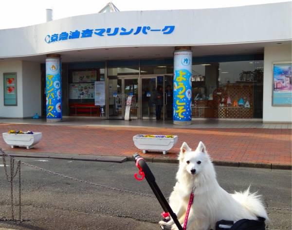 油壺マリンパーク 愛犬と一緒に楽しめる水族館