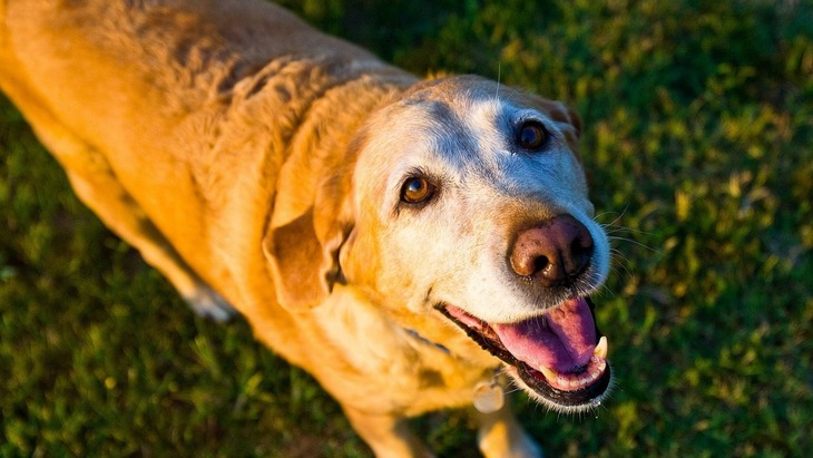愛犬がシニア期に突入する前に!飼い主が前もってできる3つのこと