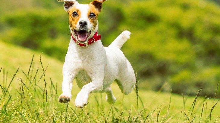 犬が心を躍らせる『お出かけスポット』5選