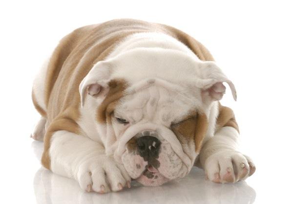 犬が嘔吐を繰り返す場合に考えられる原因