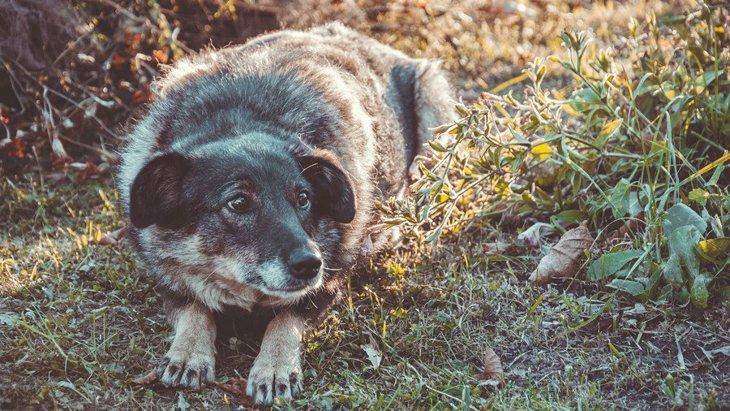 犬が『恐怖症』になっている時の症状7つ