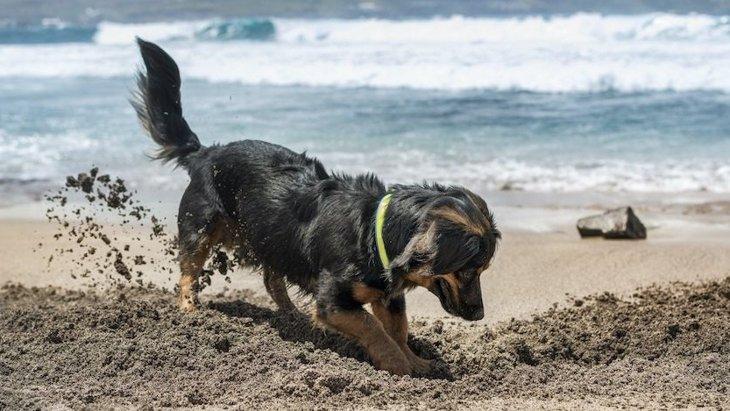 犬が『ホリホリ』する心理3選!なぜ穴掘り行動をするのか?