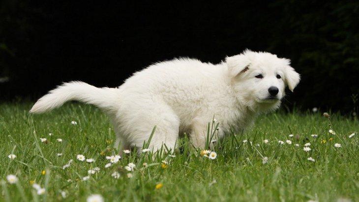 なぜ犬はウンチの後にお尻を拭かなくても綺麗なの?