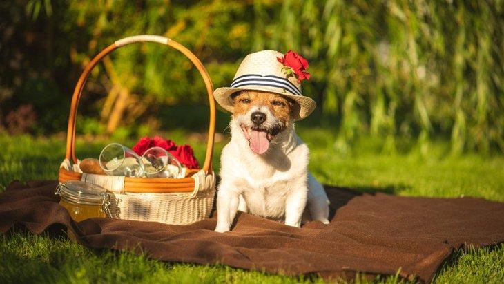犬に帽子は被せるべき?効果や適切なタイミングを解説