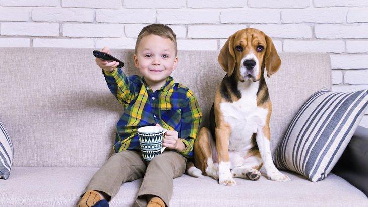 なぜテレビに興味を示す犬と示さない犬がいるの?