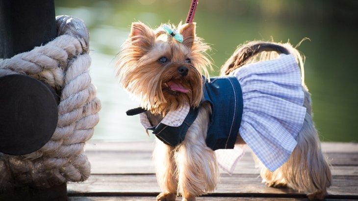 犬の洋服の種類5つ