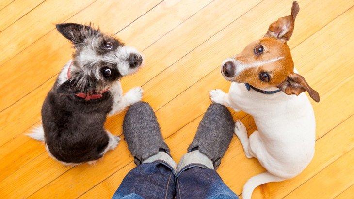 犬が『反省している時』にする仕草や行動4選