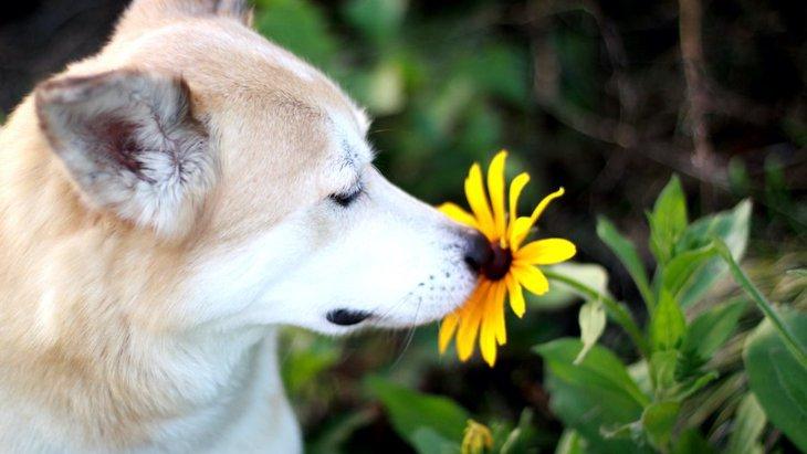 犬が『においかぎ』をする意味とは?ストレス発散?