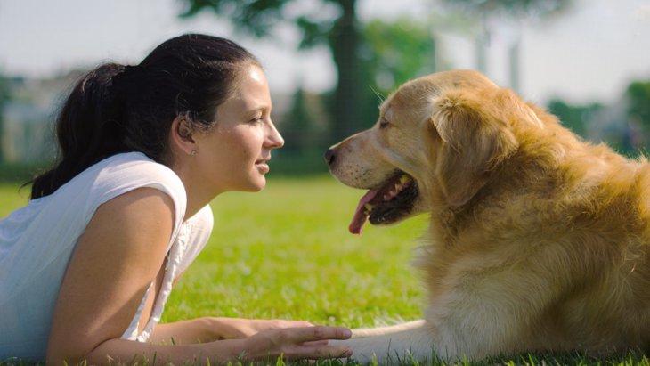 【愛犬家必見】科学的に証明!?人と犬の仲が良い「本当の理由」とは?