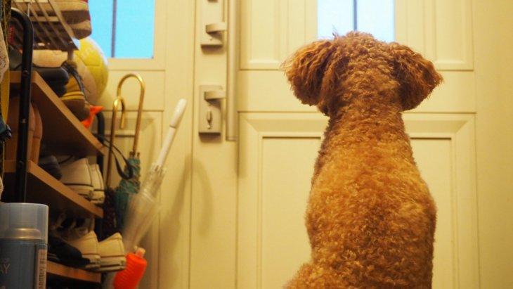 犬は留守番中に何をして過ごしてるの?