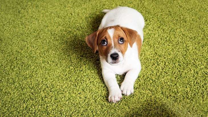 犬の愛情が冷めてしまう飼い主のNG行為7つ
