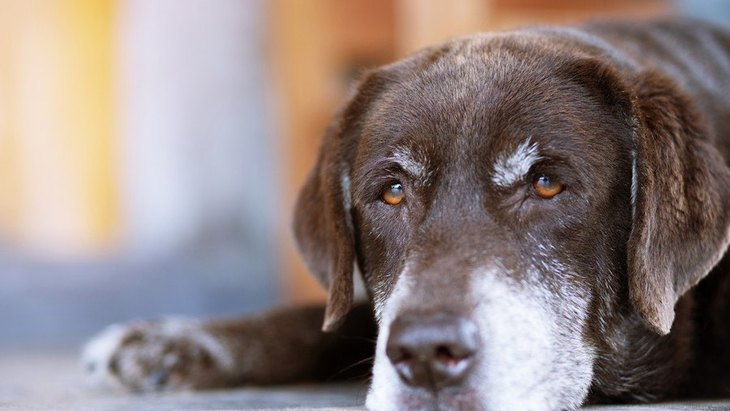 若い頃の食事とはどう違う?老犬の食事ポイント6つ