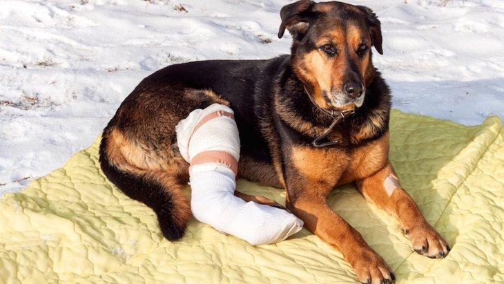 犬を骨折させないために注意したい4つのこと