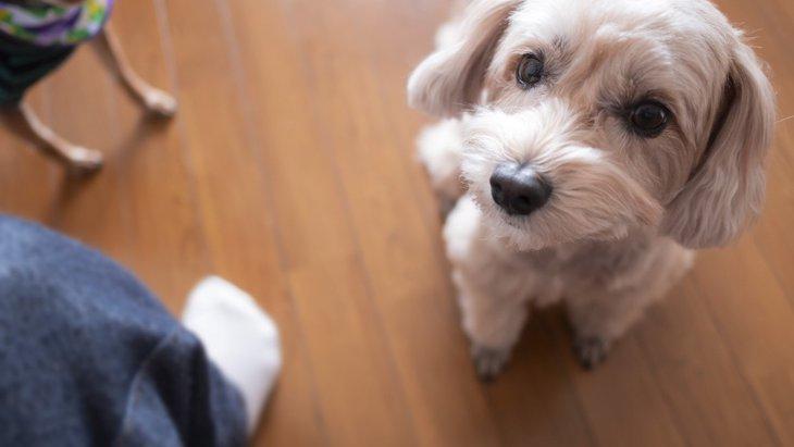 犬がよくする『構ってアピール』5つのパターンを解説