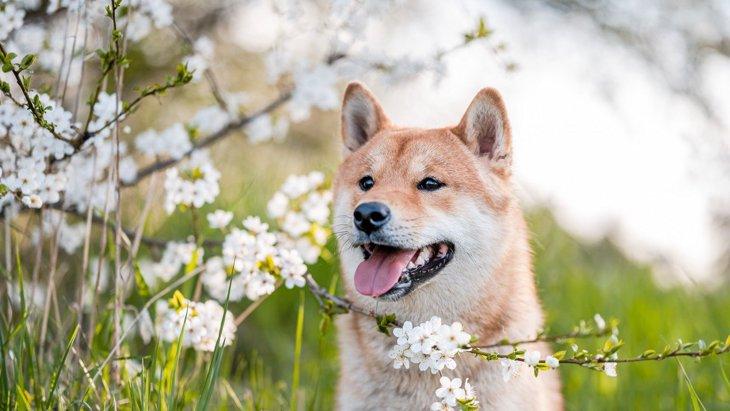 犬を『飼わないと気づけない』4つの大切なこと