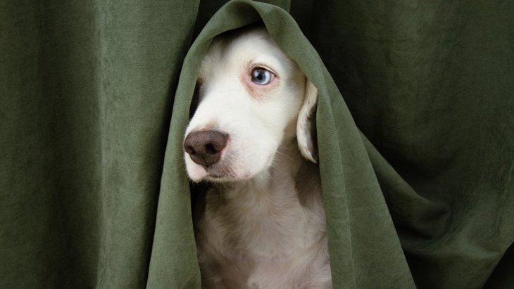 犬が震えている時はコレをしてみて!落ち着かせるコツや病院へ行くか判断する方法