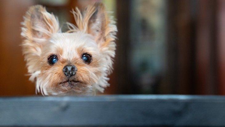 犬と正しいアイコンタクトをとる方法とは?