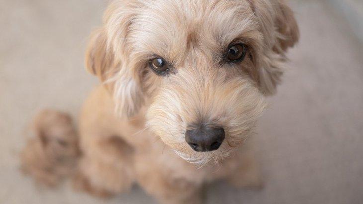 犬が普段より元気がない時の心理4つ!もしかしたら、病気になっている可能性も?