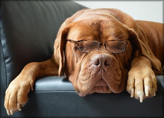 老犬の健康管理の心得5つ。歯のケア・運動・ご飯、看取るということ