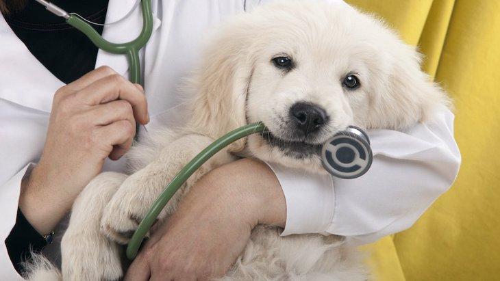 【超危険】犬が飲み込むと死に至るもの4選!今すぐ病院へ!