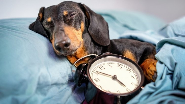 犬を飼う時にやめなければいけない生活習慣5選