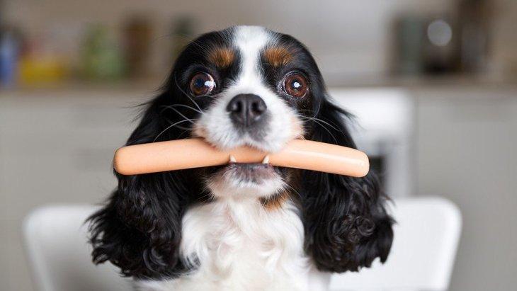 犬に魚肉ソーセージを与えても大丈夫?その成分と注意すべき塩分