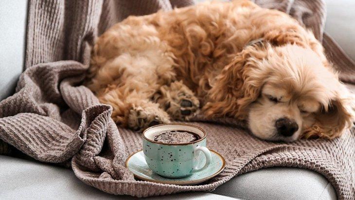 犬にコーヒーは絶対に飲ませないで!危険な理由と飲んでしまったときの対処法
