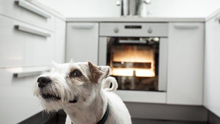 キッチンに潜む危険性!愛犬が火を付けてしまうかも…?