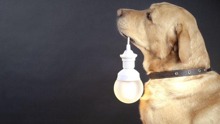犬を留守番させる時は『電気』をつけるべき?暗い部屋の方が落ち着くの?